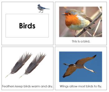 Bird Book - Toddler