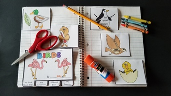 Bird Bundle - Lesson Plan, Photos, Worksheets and Activities
