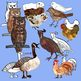Birds Realistic Clip Art in Color and Black Line and Silhouettes