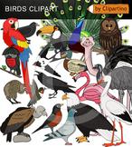 Birds Clipart Bundle