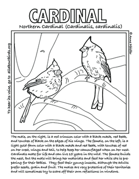 Bird Coloring Pages, Volume 1