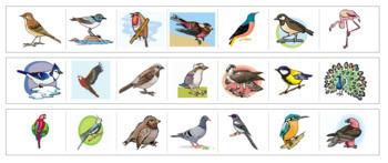 Bird Cutting Strips
