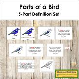 Bird Definition Set