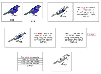 Bird Definition Set