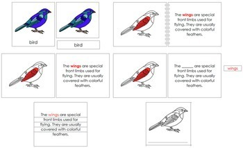 Bird Definition Set (Red)