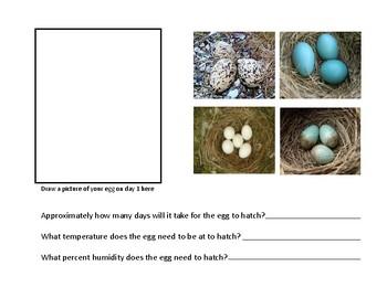 Bird Egg Observation Journal