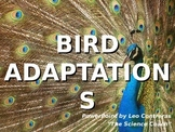 Bird Feet AND Beak Adaptations COMPLETE LESSON