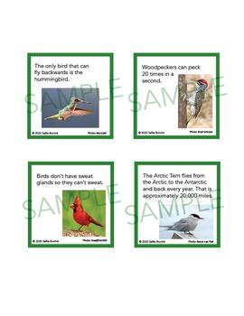 Birds Unit Activity - Fun Fact Cards for Games, Bulletin Board