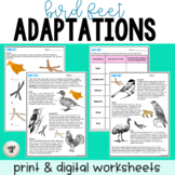 Bird Feet - Adaptations Activity - Print & Google Versions
