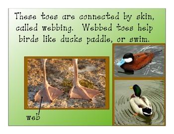 Bird Feet Adaptations Book