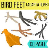 Bird Feet (Adaptations) Clipart