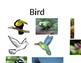 Bird File Folder Game/Sort