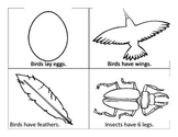 Bird, Fish and Insect Sort