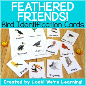 Bird Identification Flashcards - Feathered Friends!