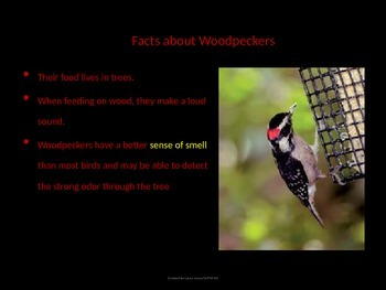 Bird Lesson-SPRING