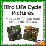Bird Life Cycle Photographs