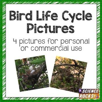 Bird Life Cycle Photographs