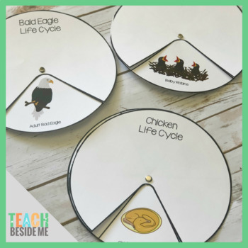 Bird Life Cycle Spinners