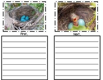 Bird Life Cyle Book