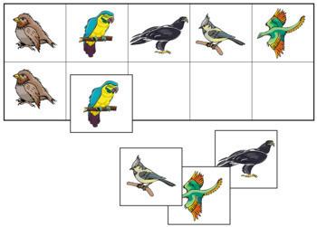 Bird Match-Up and Memory