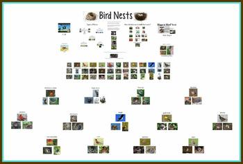 Birds and Bird Nests
