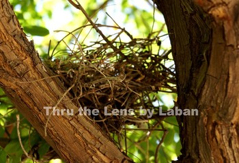 Bird Nest Stock Photo #152