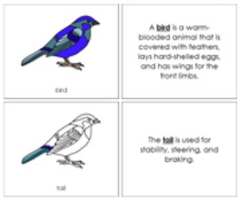 Bird Nomenclature Book