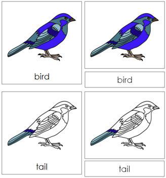 Bird Nomenclature Cards
