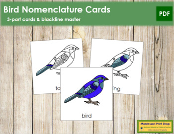 Bird Nomenclature Cards