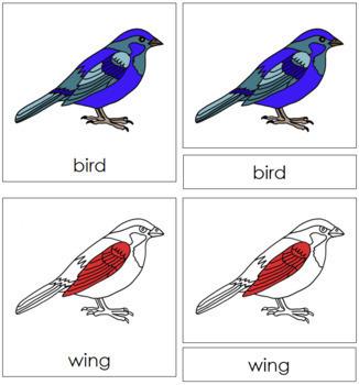 Bird Nomenclature Cards (Red)