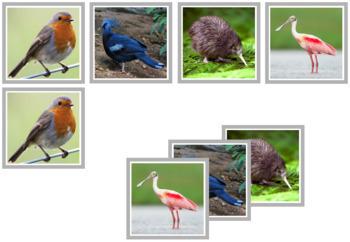 Bird Photo Matching Cards