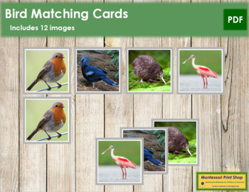 Bird Matching Cards