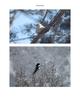 Bird Photos!
