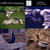 Bird Photos - Bird Photographs - Personal and Commercial Use