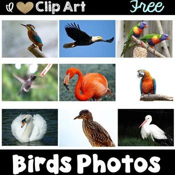 Bird Photos Freebie