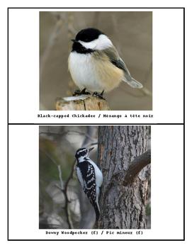 Bird Photos with Bilingual Names