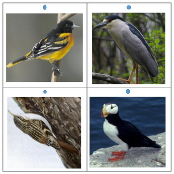 Bird Picture Set 2 for Quiz Board