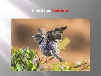 Bird Power Point/Flashcard set (ESL, Reading, Language, Science)