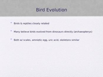 Bird PowerPoint