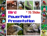Bird PowerPoint Presentation for Biology or Zoology