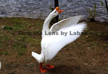 Bird Stock Photo #40