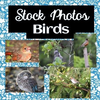 Bird Stock Photos!