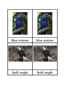 Bird Three Park Cards