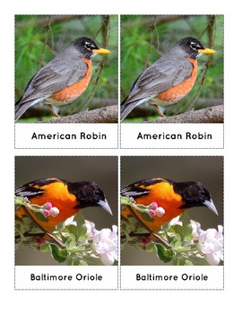 Three Part Cards: Toob Birds (Ft. Proper Common Names)