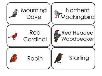 Bird Types Picture Word Flash Cards. Preschool flash cards for children.
