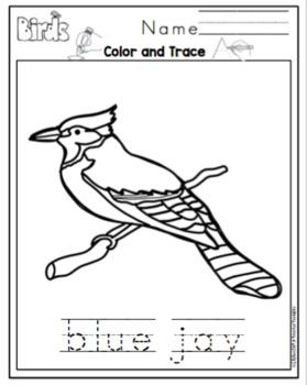 Bird Types Printable