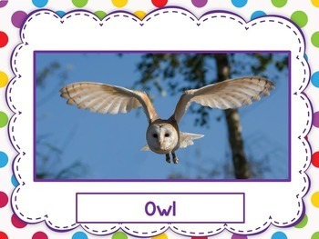 Bird Vocabulary in English - Great For ESL, ELL, Newcomers, Dual Language
