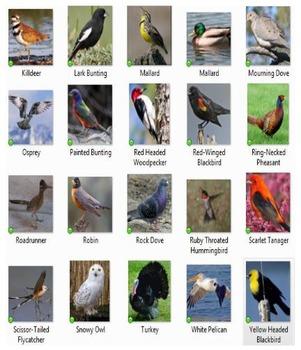 Bird Watch 1