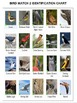 Bird Watch 2