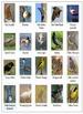 Bird Watch 3